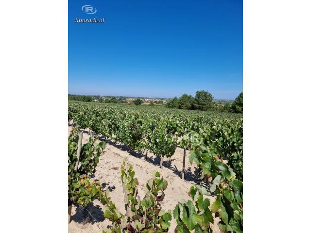 Poceirão - quinta com 25000 m2 com vinha, permite 800 m2 construção.